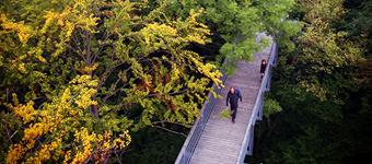 Baumkronenpfad – Thüringen