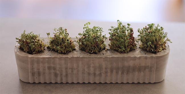 DIY Kressetöpchen aus Beton